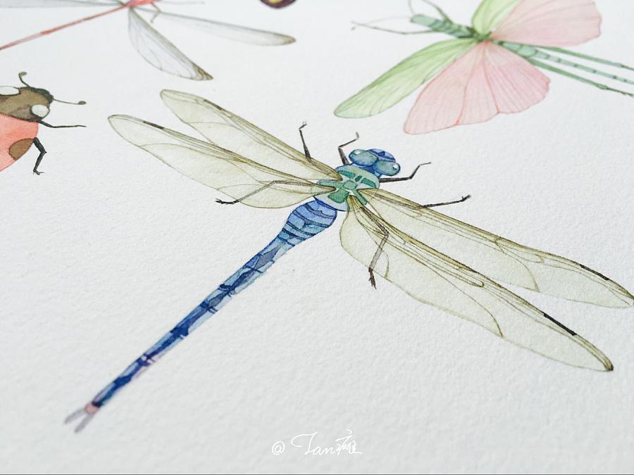 《昆虫》水彩手绘插画|商业插画|插画|tan瘫大仙儿