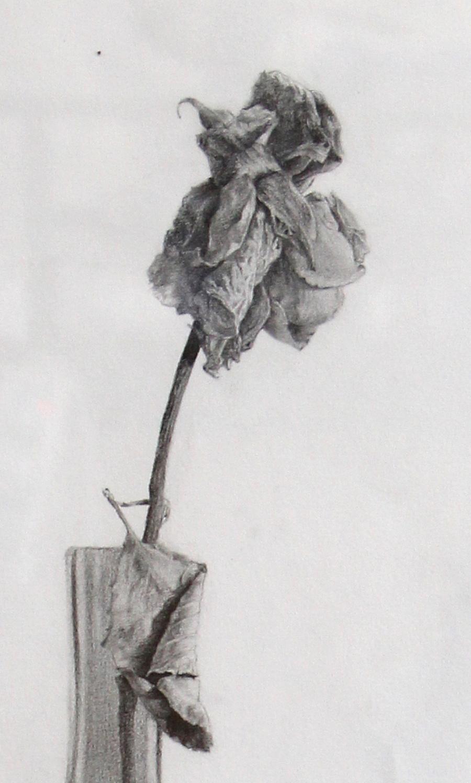 艺术花瓶素描图片展示