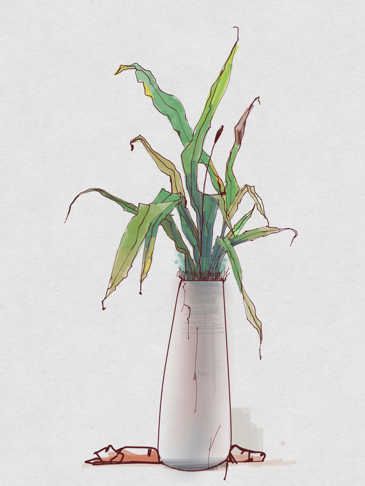 植物成长记录图片