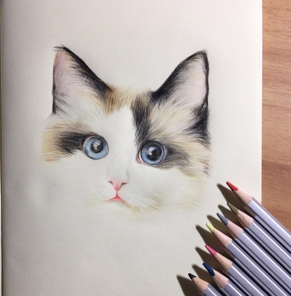 彩铅手绘猫咪