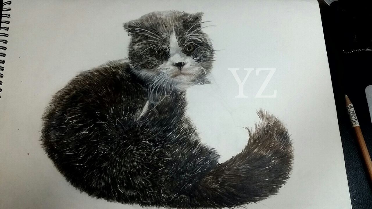 彩铅手绘画作《苏格兰折耳猫》材料:48色