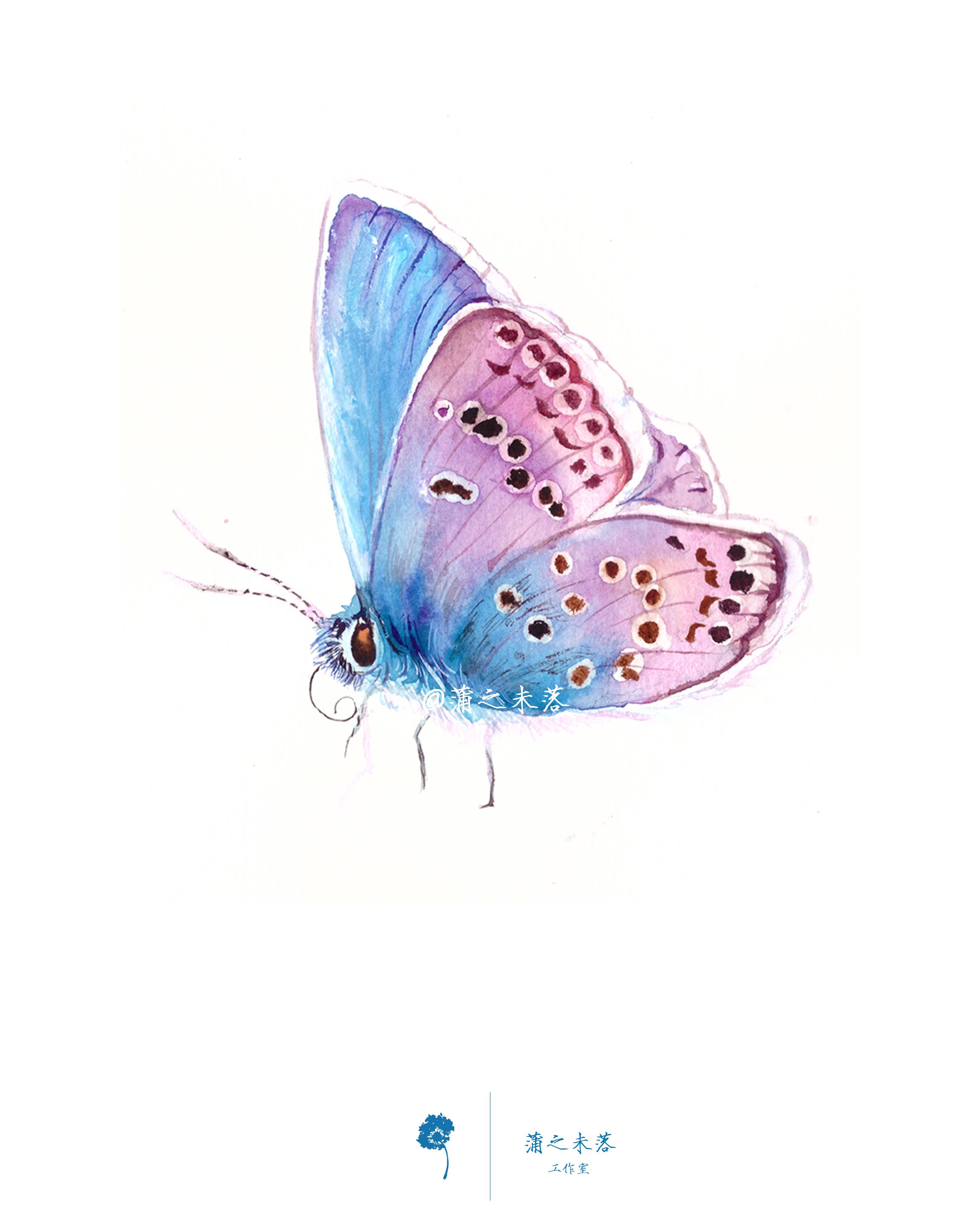 水彩手绘--蝴蝶