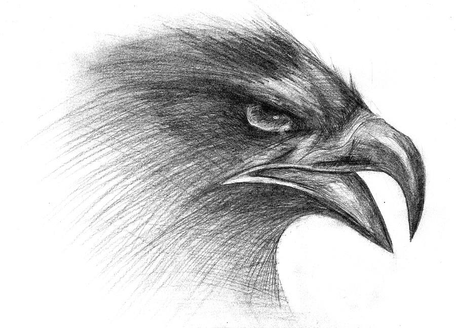 原创作品:手绘素描(鹰)