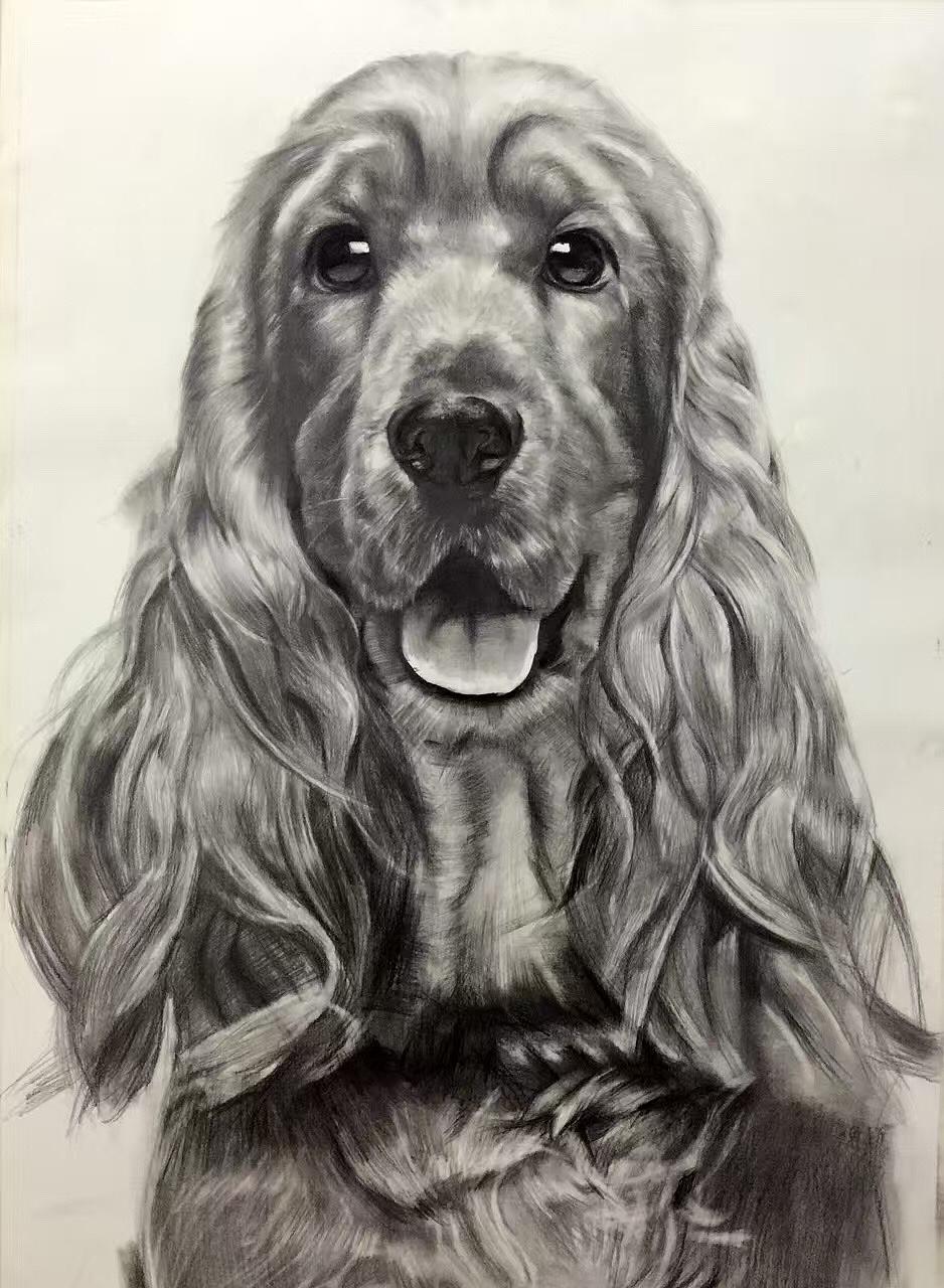 动物狗素描图片