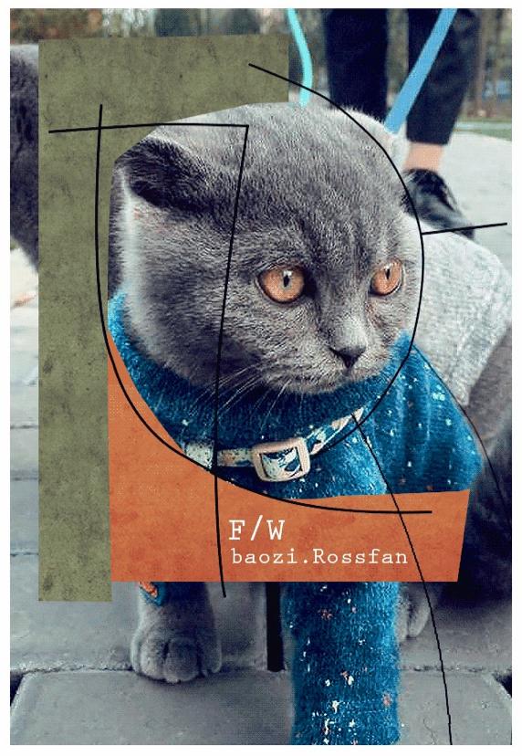 cat 怎么搭配衣服