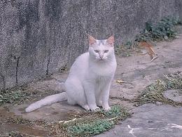 寻猫集36