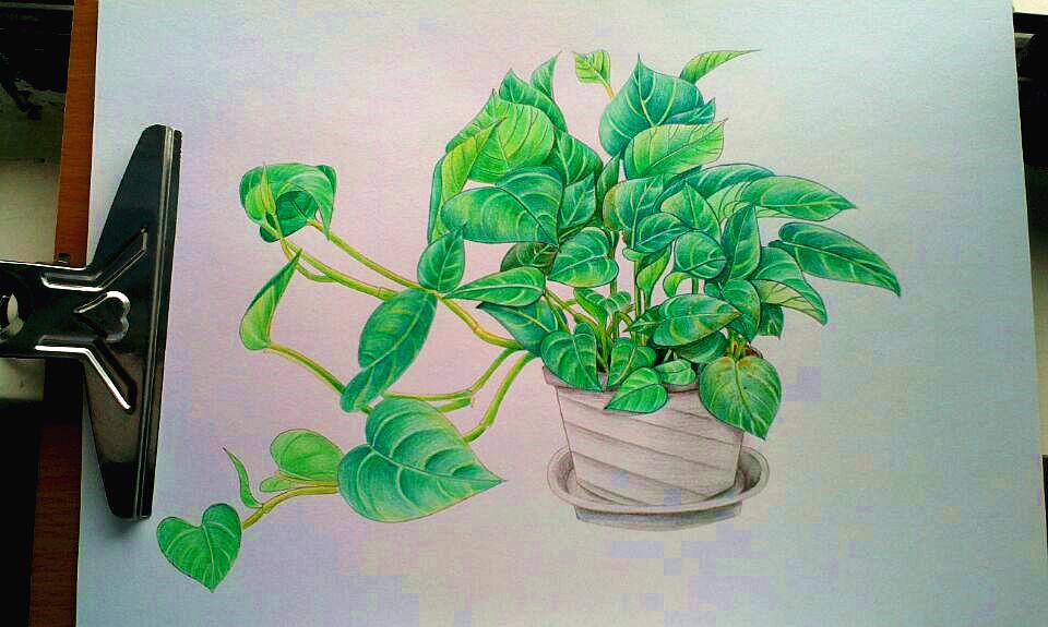 绿萝卡通图片手绘