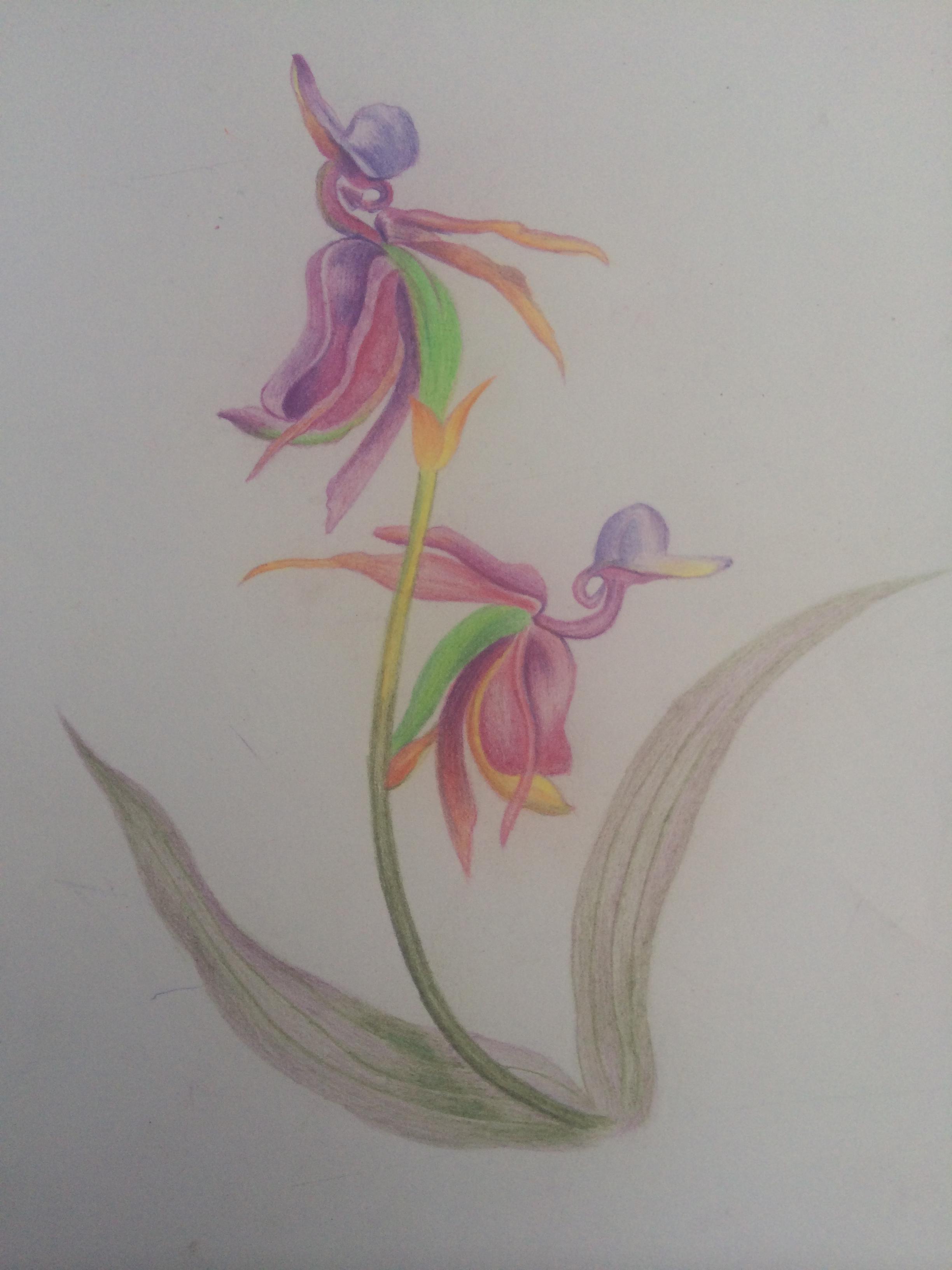 彩铅手绘花卉