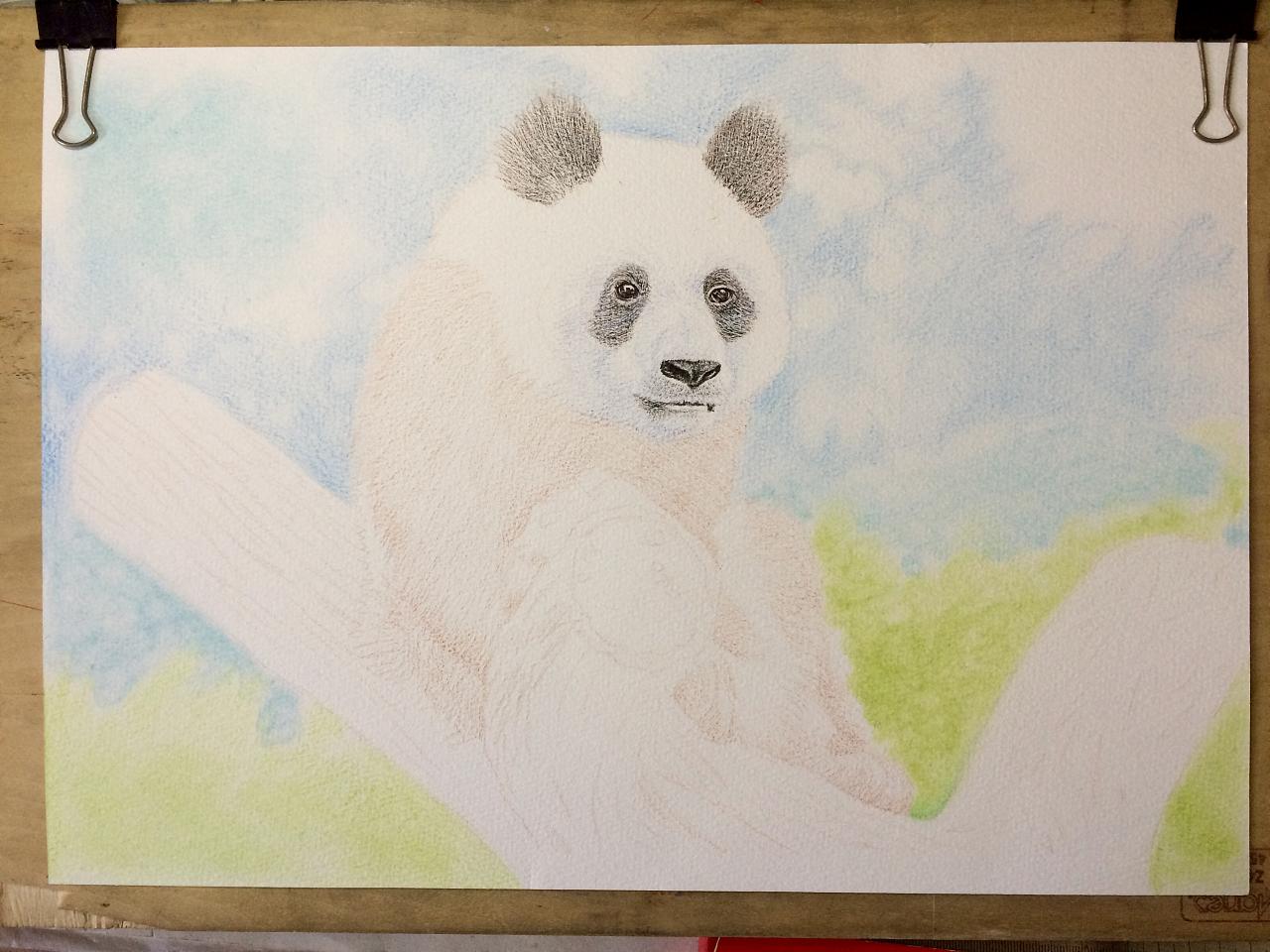 彩铅手绘/熊猫