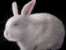 ps绘制超写实动物毛发 兔子