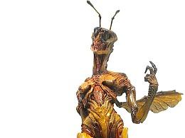 石崎的蜂女