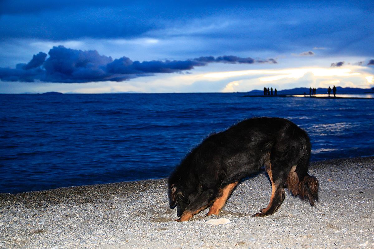 蓝色纳木错边的黑狗,西藏期一成绩查询考试高中新郑年级未图片