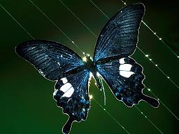 绽影像之《蝶的五线谱》