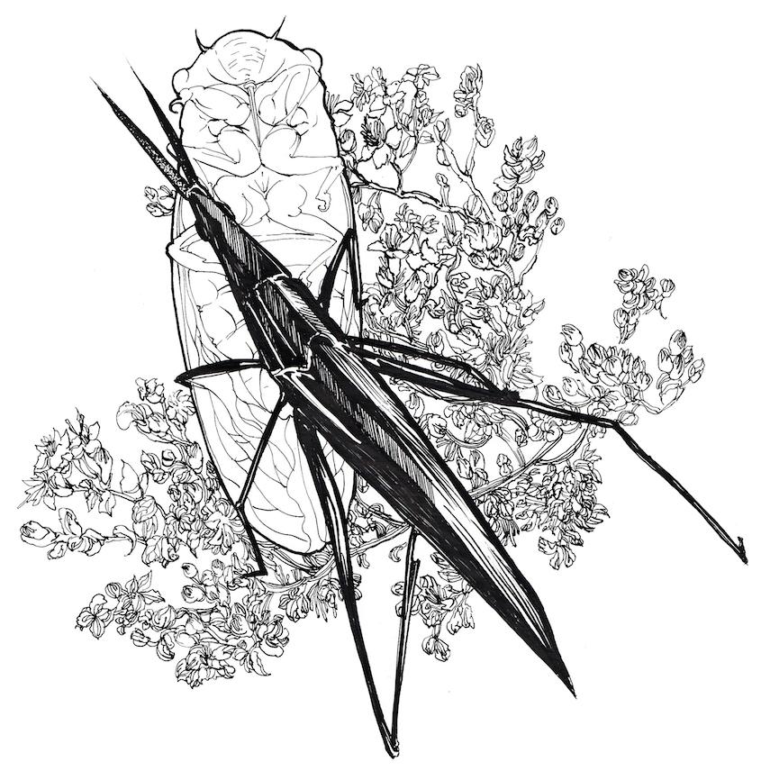 昆虫记|商业插画|插画|钟大年儿
