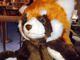 人家是机器小熊猫不是小浣熊啦~