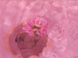 「 雏 菊 」