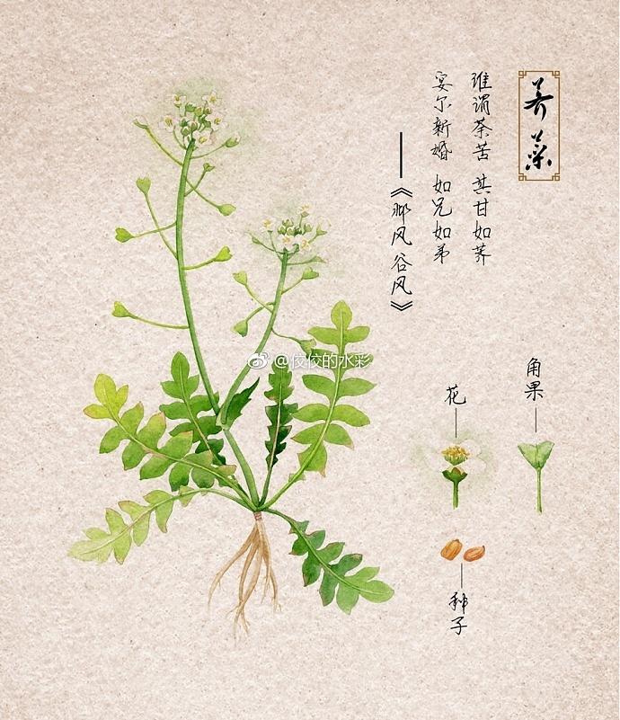 植物观察记录表封面