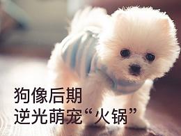 """狗像后期:逆光萌宠""""火锅"""""""
