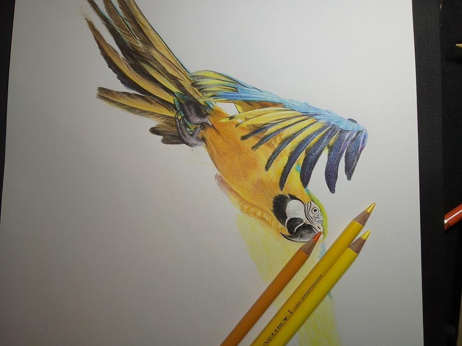 壁纸 动物 昆虫 鸟 鸟类 雀 桌面 900_675