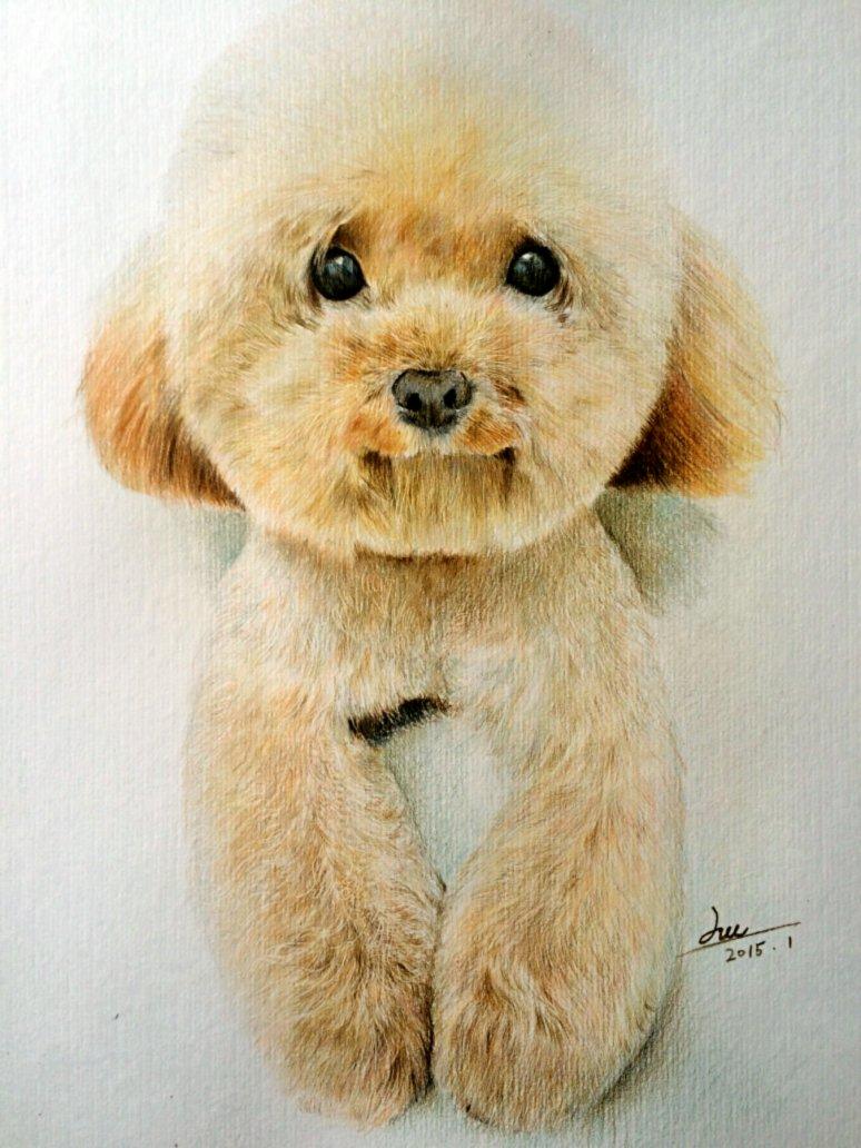 铅笔手绘泰迪狗
