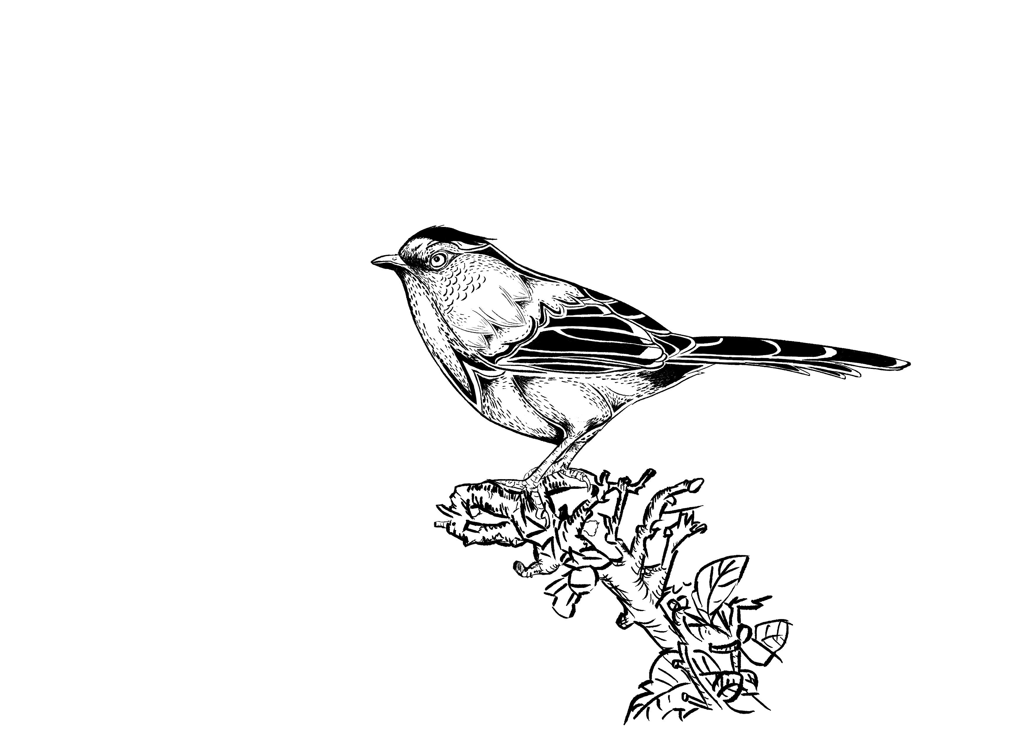 点线面 手绘鸟