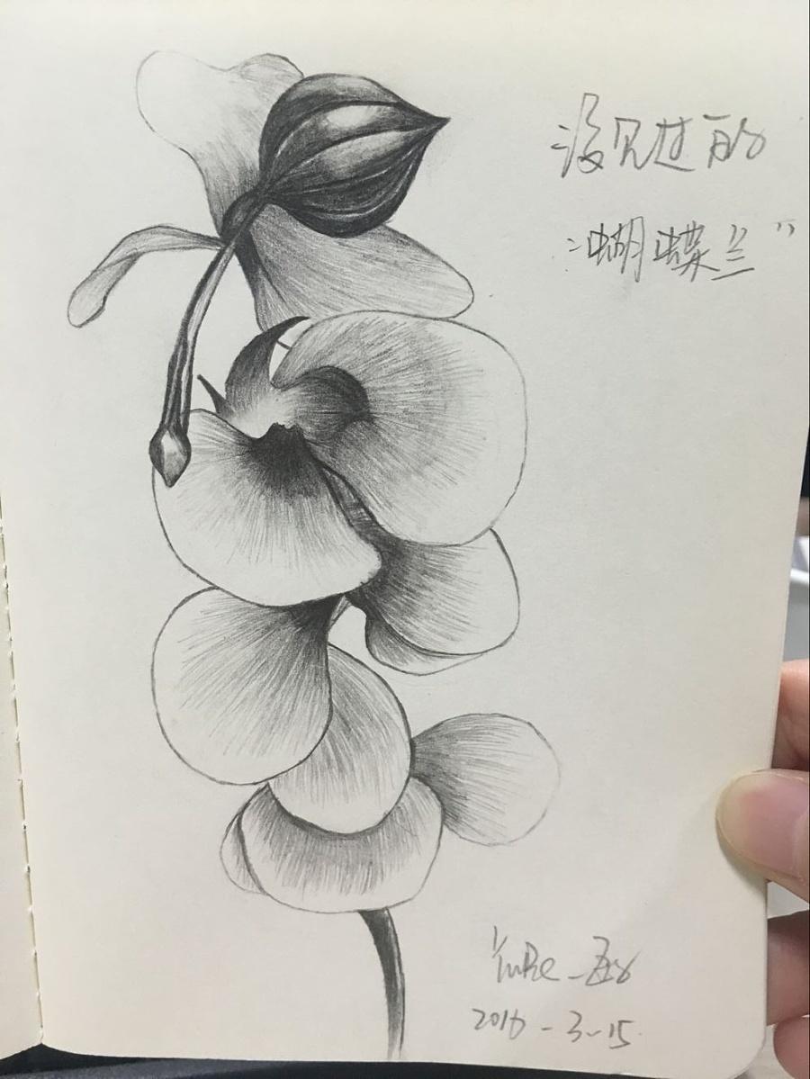 花系列铅笔手绘