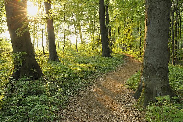 森林素材2图片