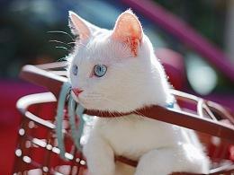 《遛猫吖》米吸摄影