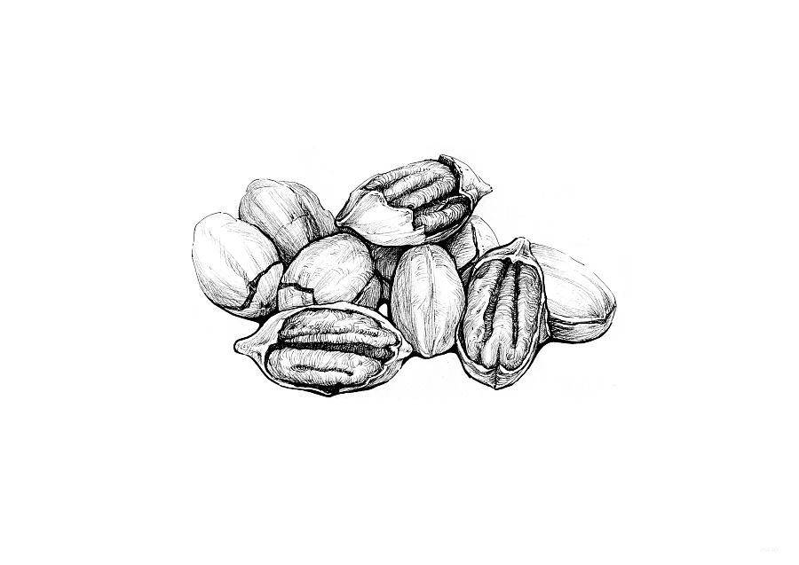系列坚果手绘图片