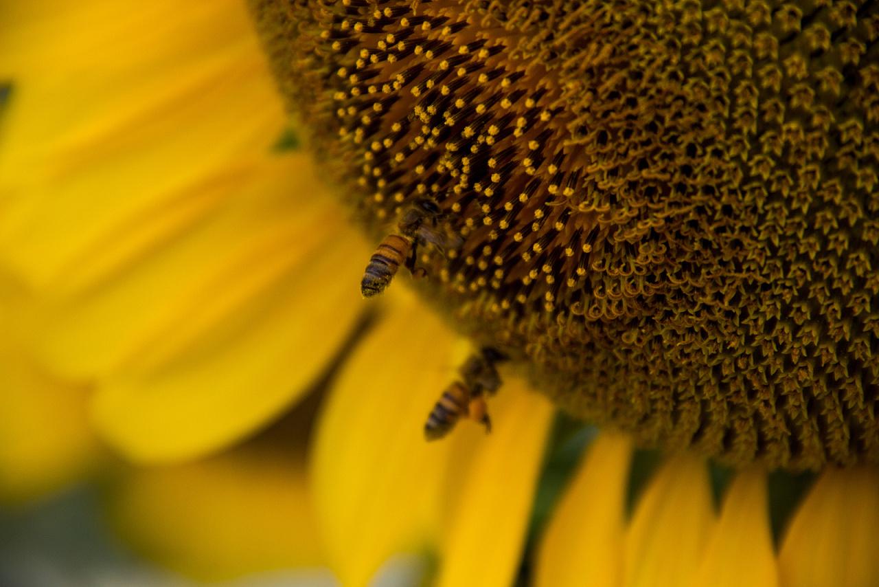 向日葵,荷花,石头,蜜蜂,螃蟹,露珠