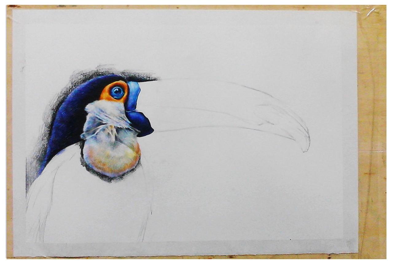 彩铅鸟类手绘——附过程图