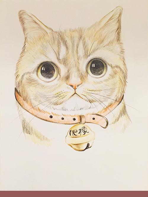 猫咪彩铅手绘作品