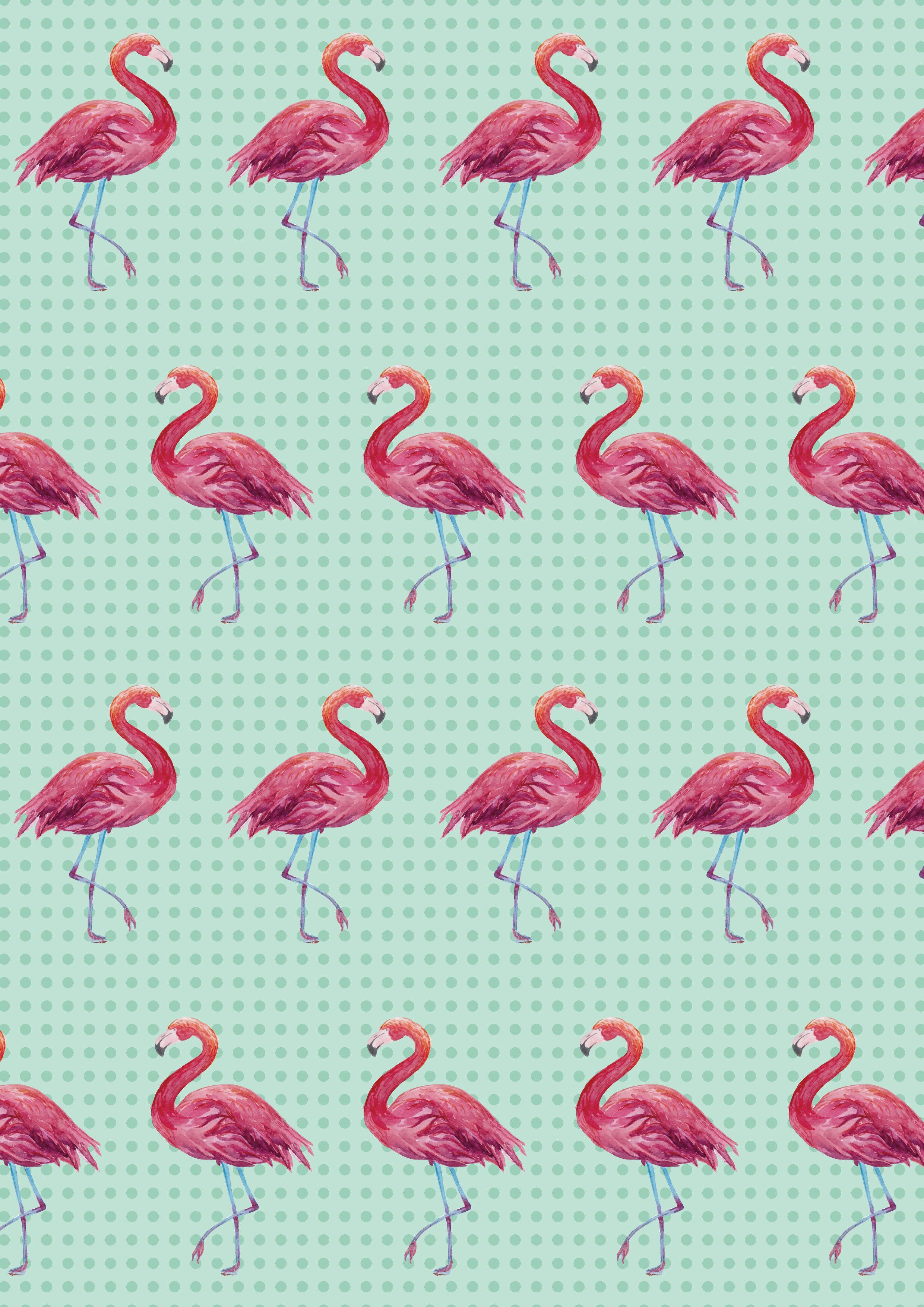 火烈鸟手机壁纸
