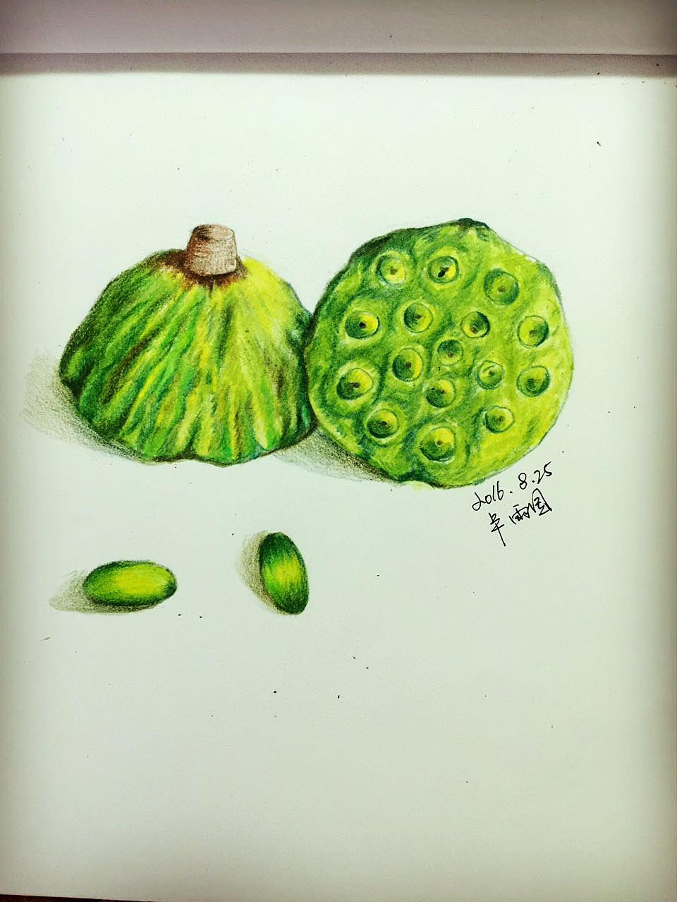 手绘莲蓬 绿色清爽 彩绘 绘画