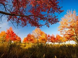 阿勒泰红树林