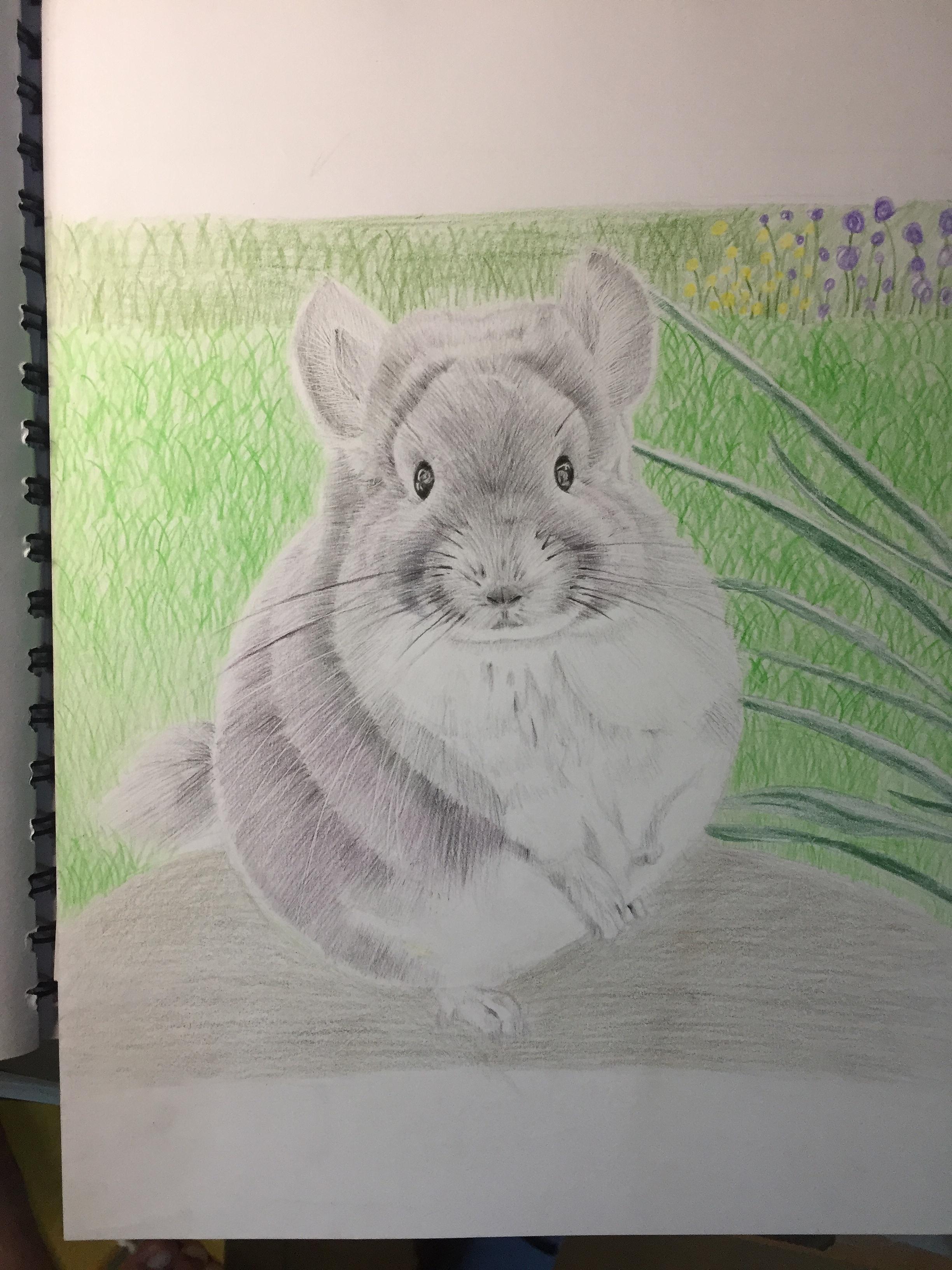 标签:彩铅手绘龙猫 作品信息 相关作品