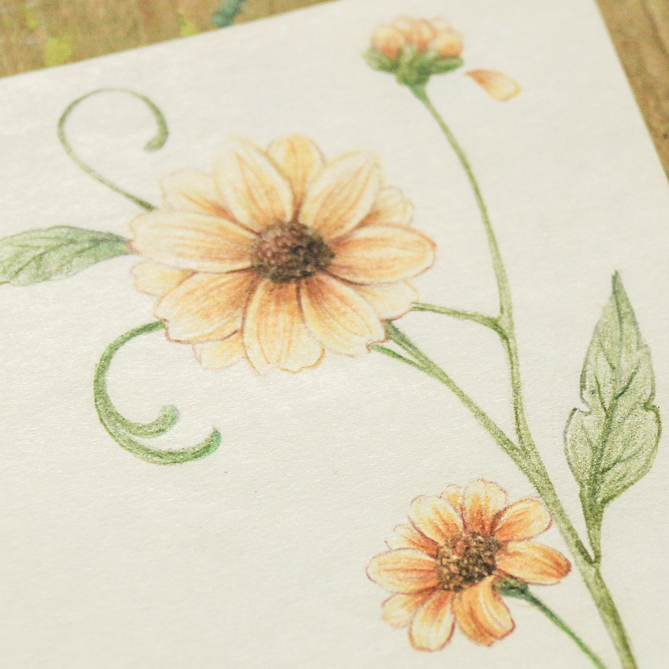 彩铅手绘花