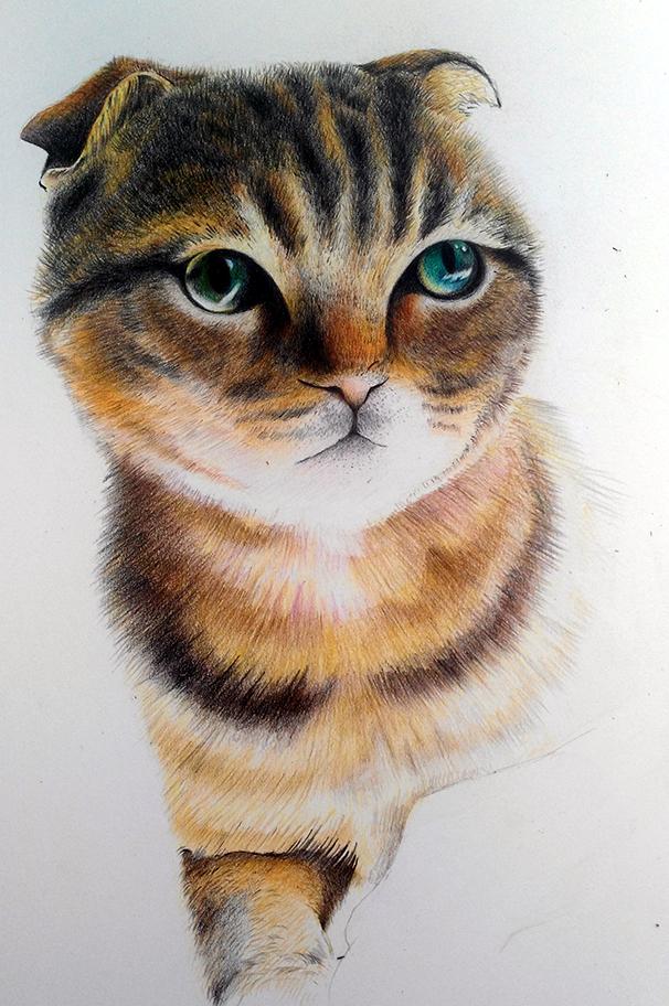 手绘#彩铅猫咪小虎 彩铅 纯艺术 zhuangyiduo