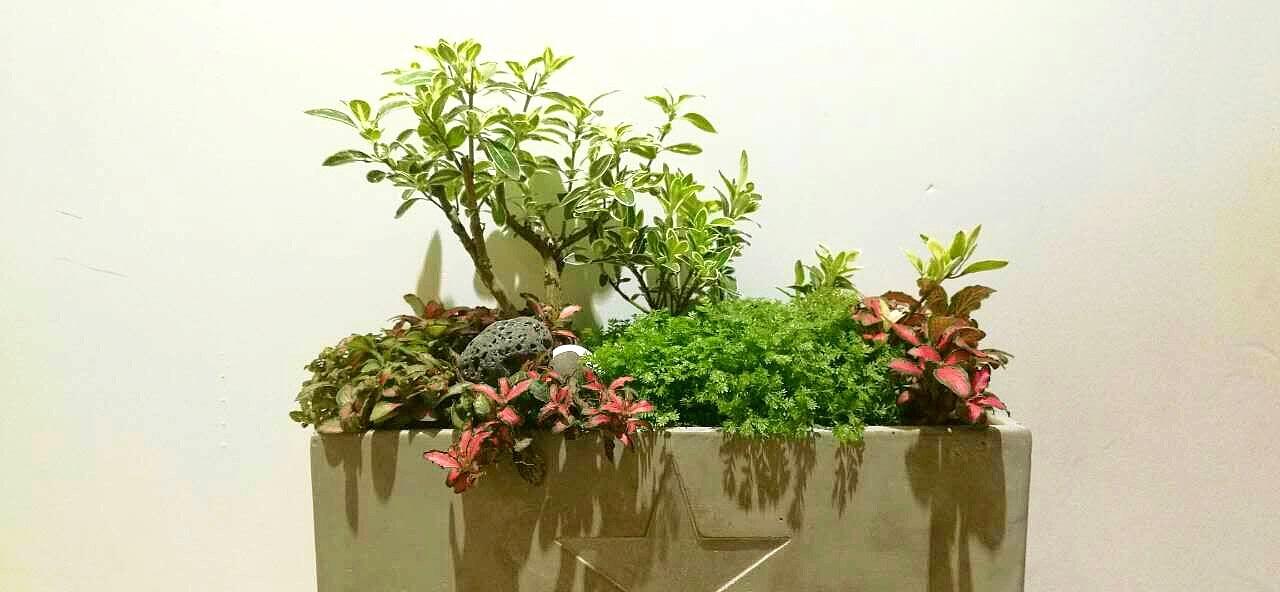 园艺植物组合