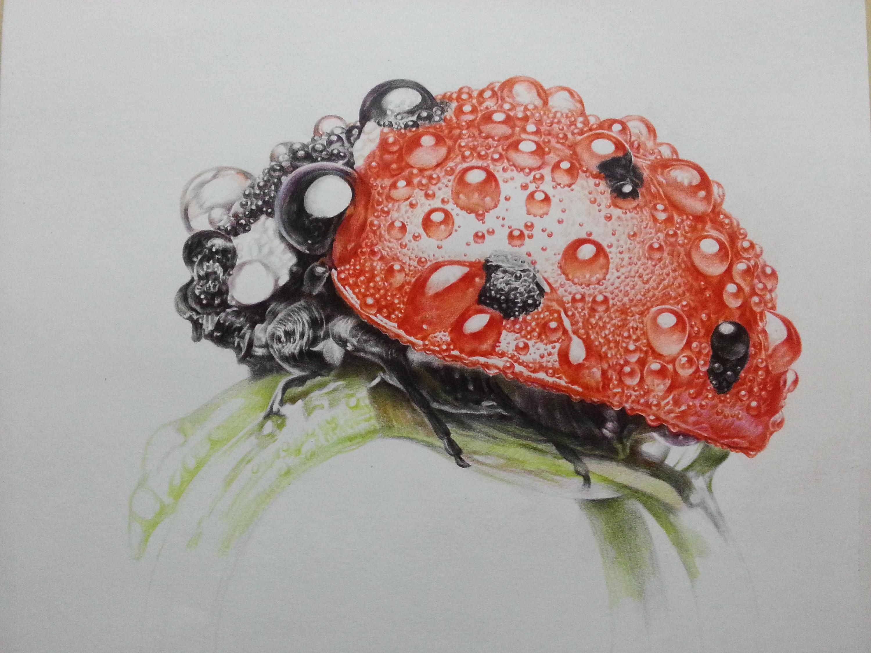 注册新的qq号_小世界 (微观写实 彩铅画)|纯艺术|彩铅|许欢 - 原创作品 - 站酷 (ZCOOL)