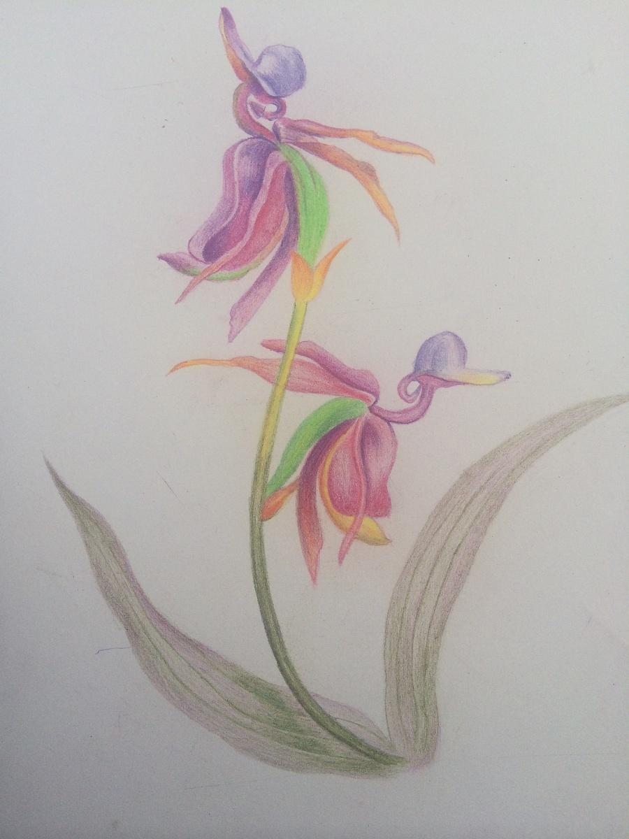 彩铅手绘花卉|绘画习作|插画|ui