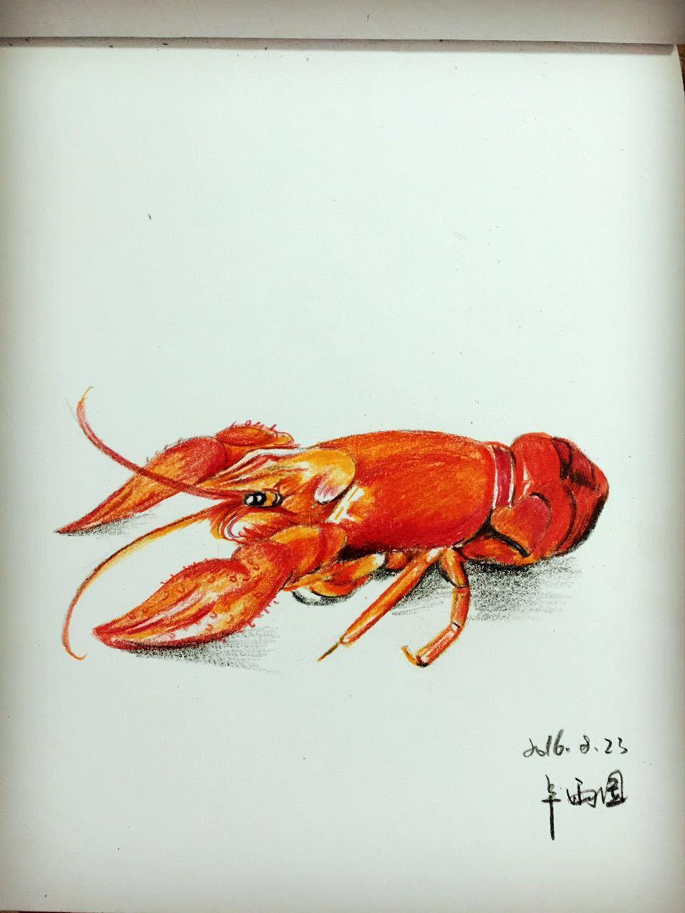 手绘小龙虾 彩铅