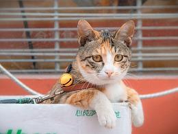 宠物摄影丨扫街寻找街头宠物