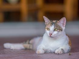 寻猫集92