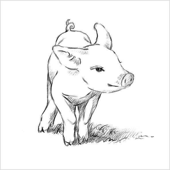 精致小猪手绘图片