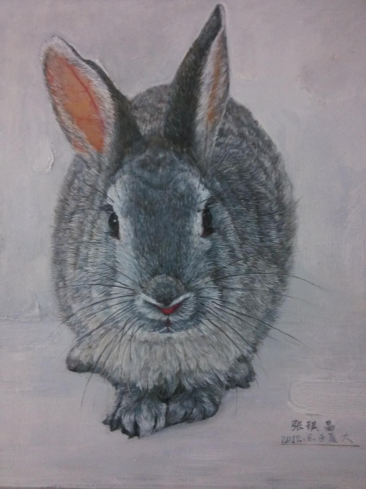 梦见一只灰兔子在奔跑? 梦见一只灰色的兔子