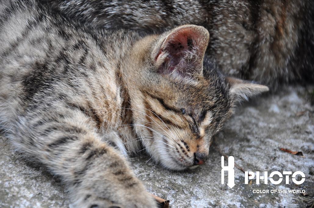 猫咪进行曲|摄影|动物|_seven - 原创作品 - 站酷