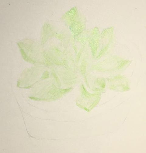 手绘过程多肉植物