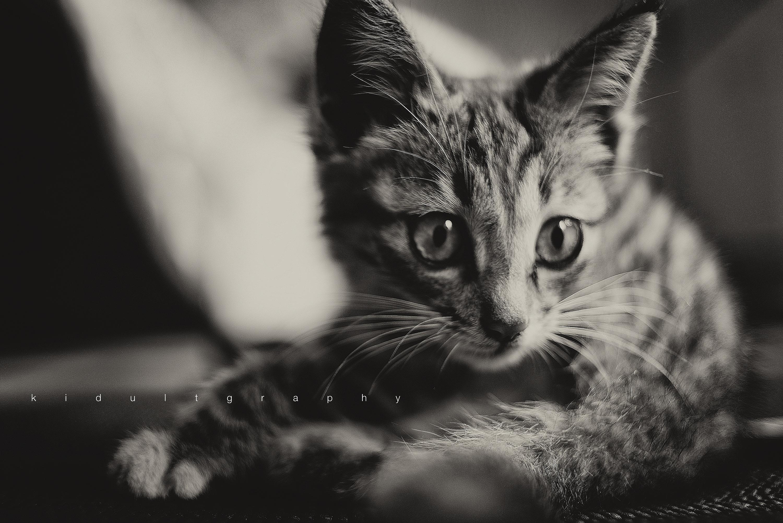 可爱猫咪简手绘黑白