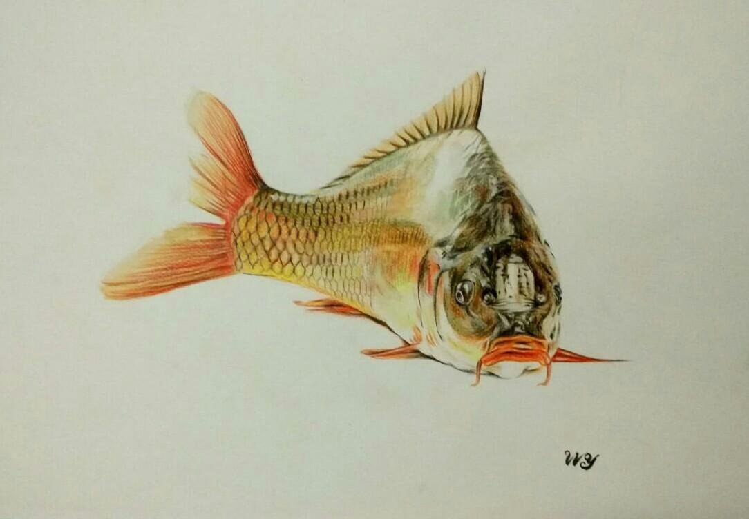 壁纸 动物 鱼 鱼类 1084_752